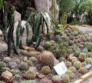 Cactus & Succulent Gardens at the 6th China Flower Expo in Chengdu