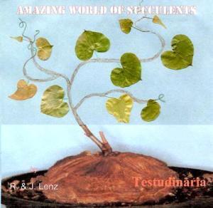 Euphorbia rowlandii R. A. Dyer