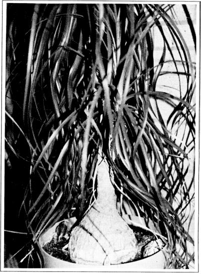 The plant on page 8 after Photoshopping.