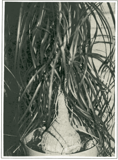 The plant on page 8 before Photoshopping.